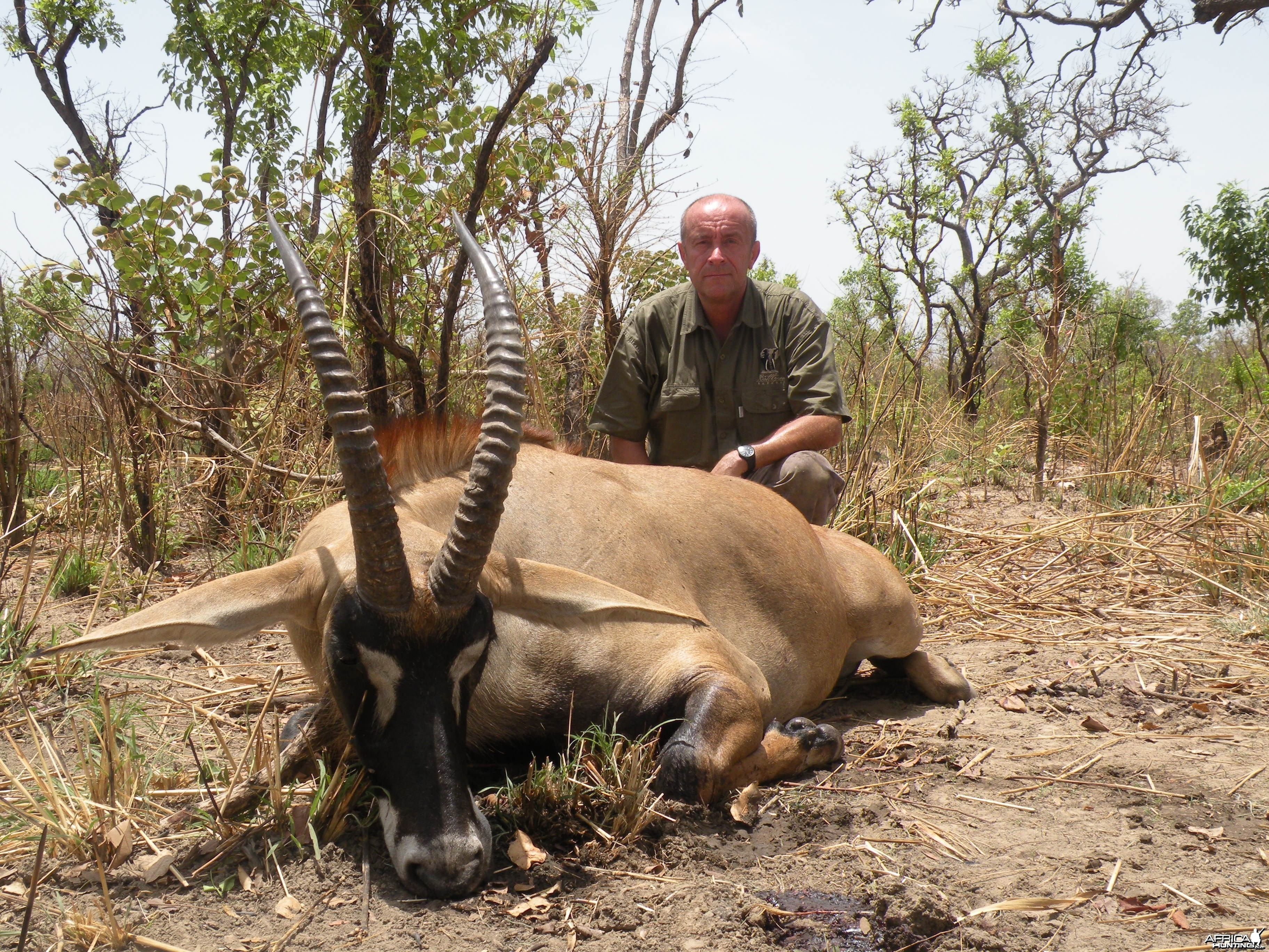 Western Roan Antelope hunted in Benin with Club Faune