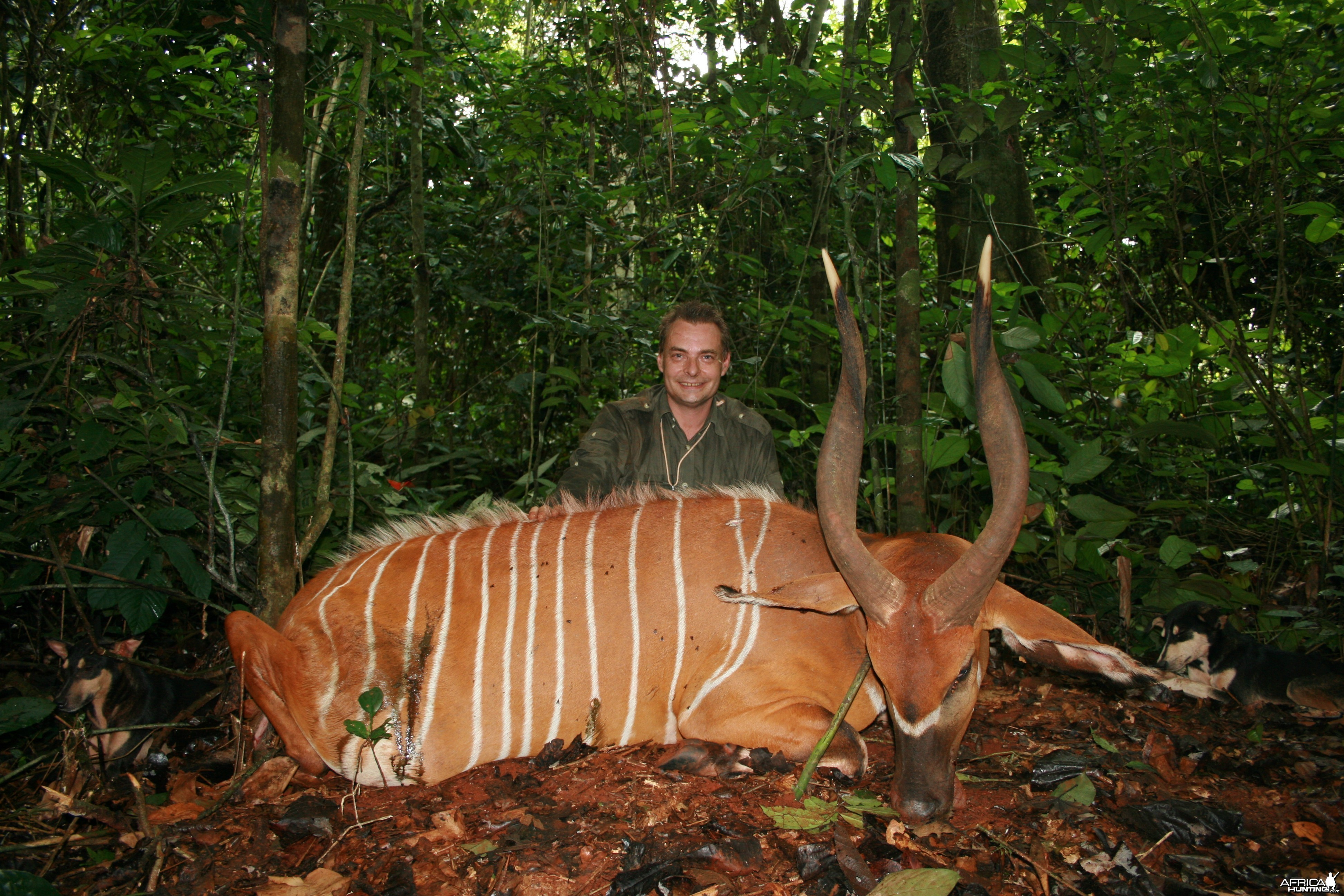 Bongo hunted in Cameroon with Club Faune