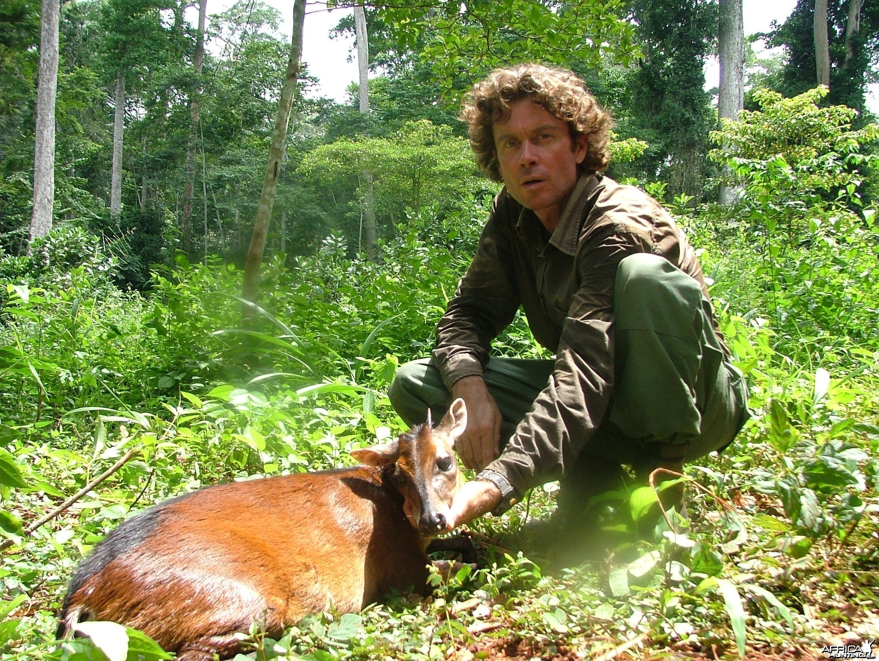 Red-Flanked Duiker hunted in Cameroon with Club Faune