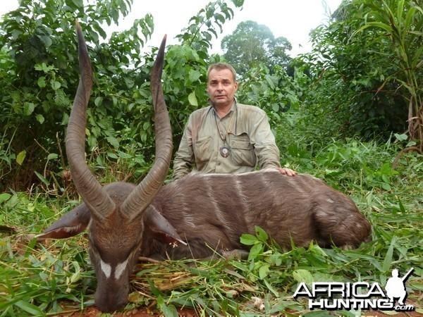 Western Sitatunga hunted in Cameroon with Club Faune