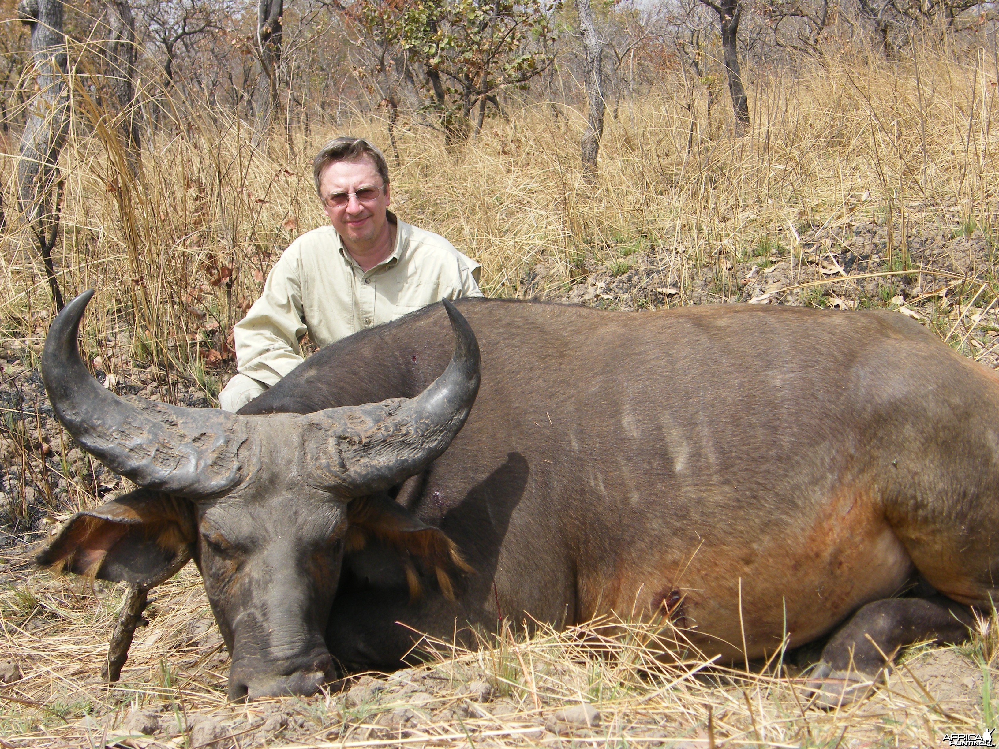 West African Savannah Buffalo hunted in Cameroon with Club Faune