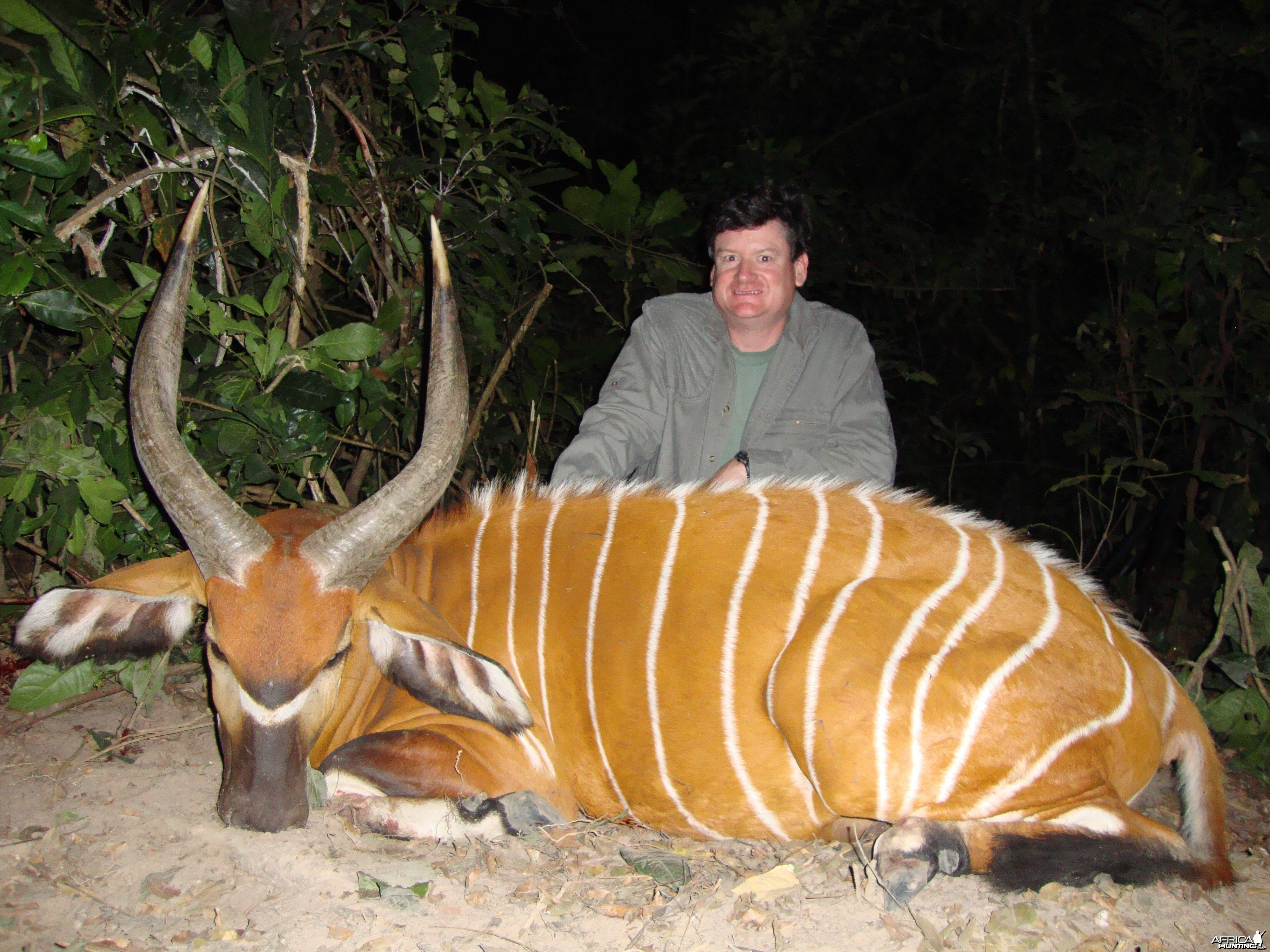 Bongo hunted in Central Africa with Club Faune