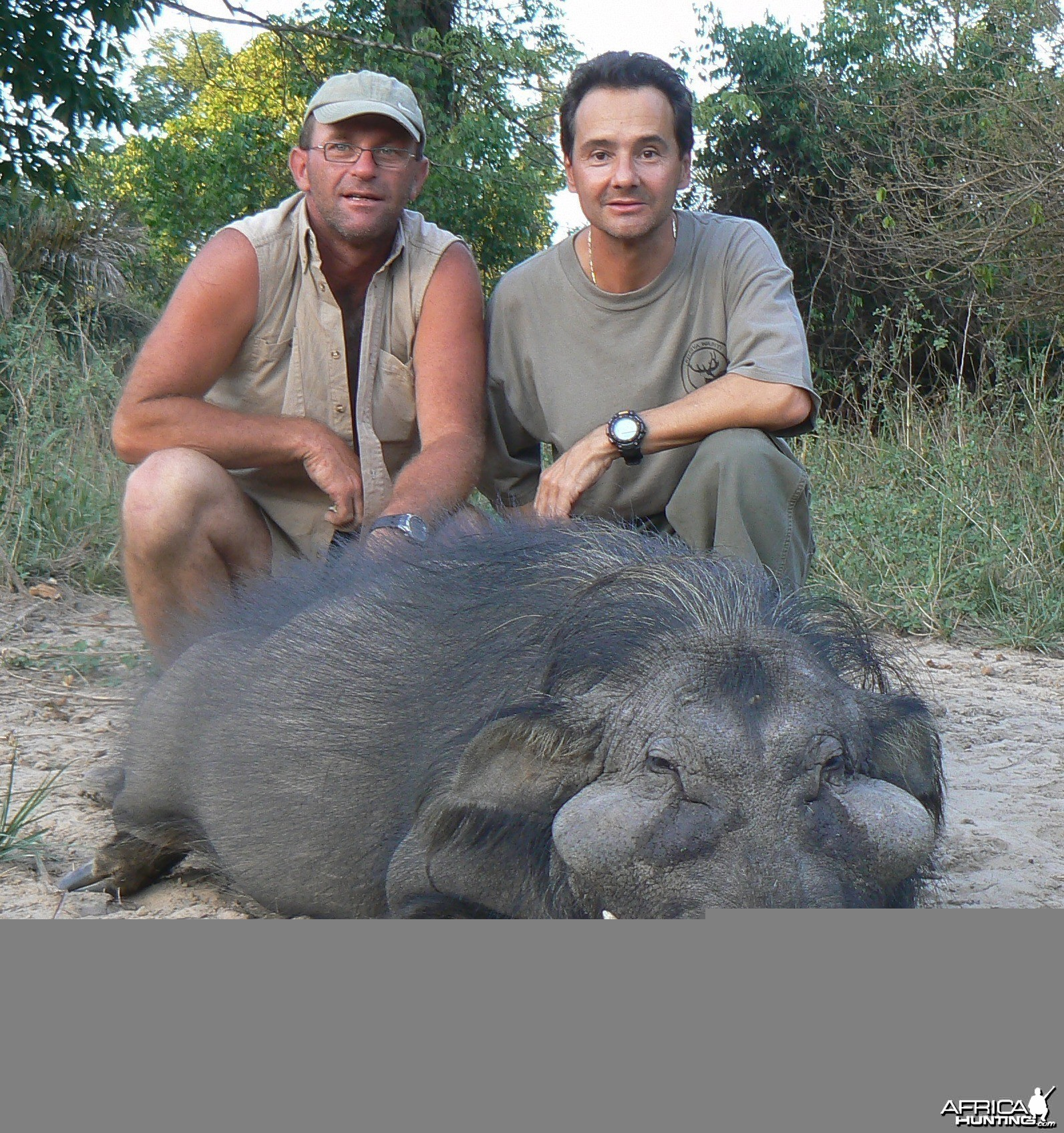Giant Forest Hog hunted in Central Africa with Club Faune