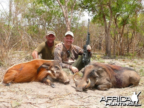 Red River Hog and Warthog hunted in Central Africa with Club Faune