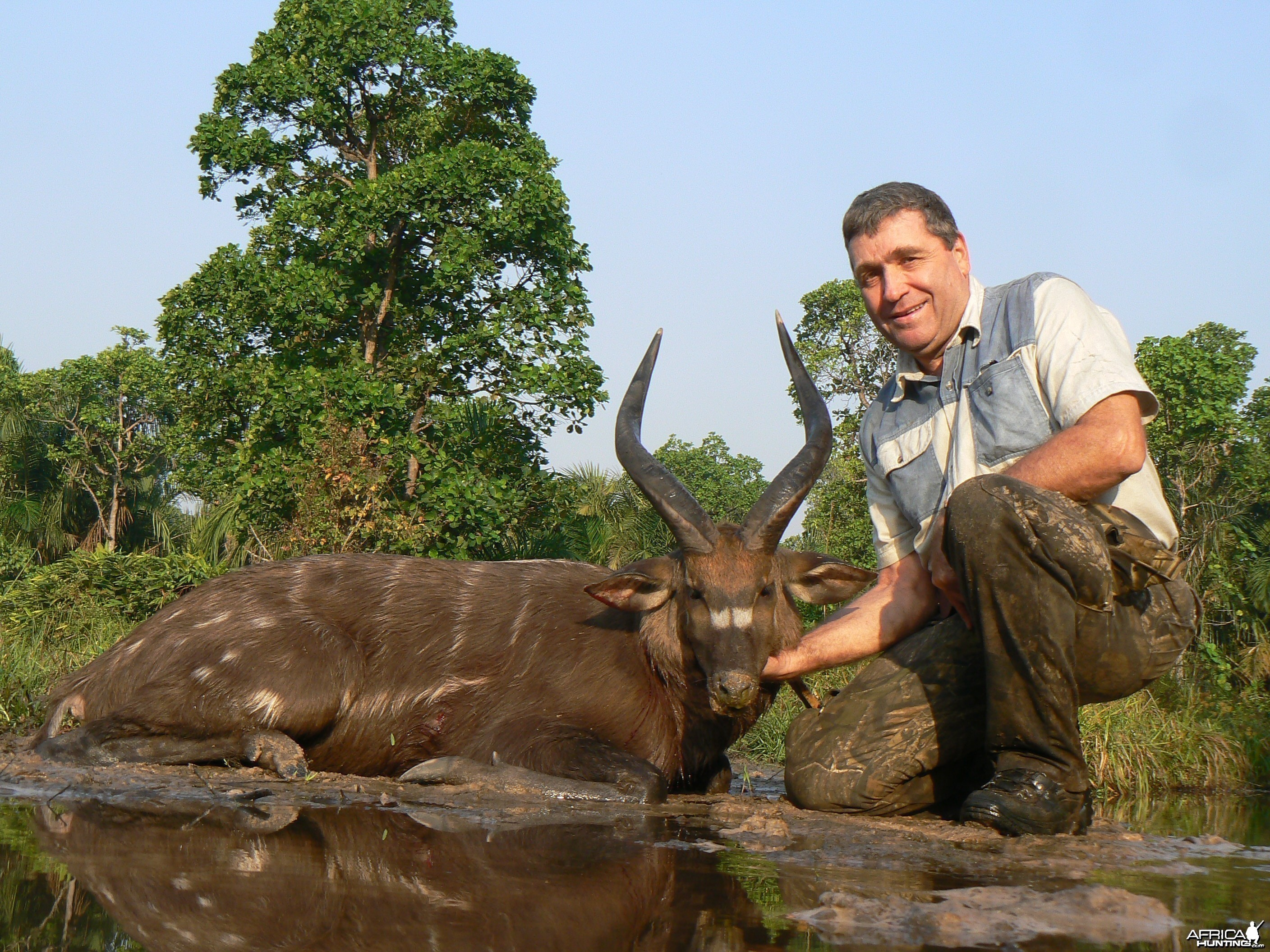 Western Sitatunga hunted in Central Africa with Club Faune