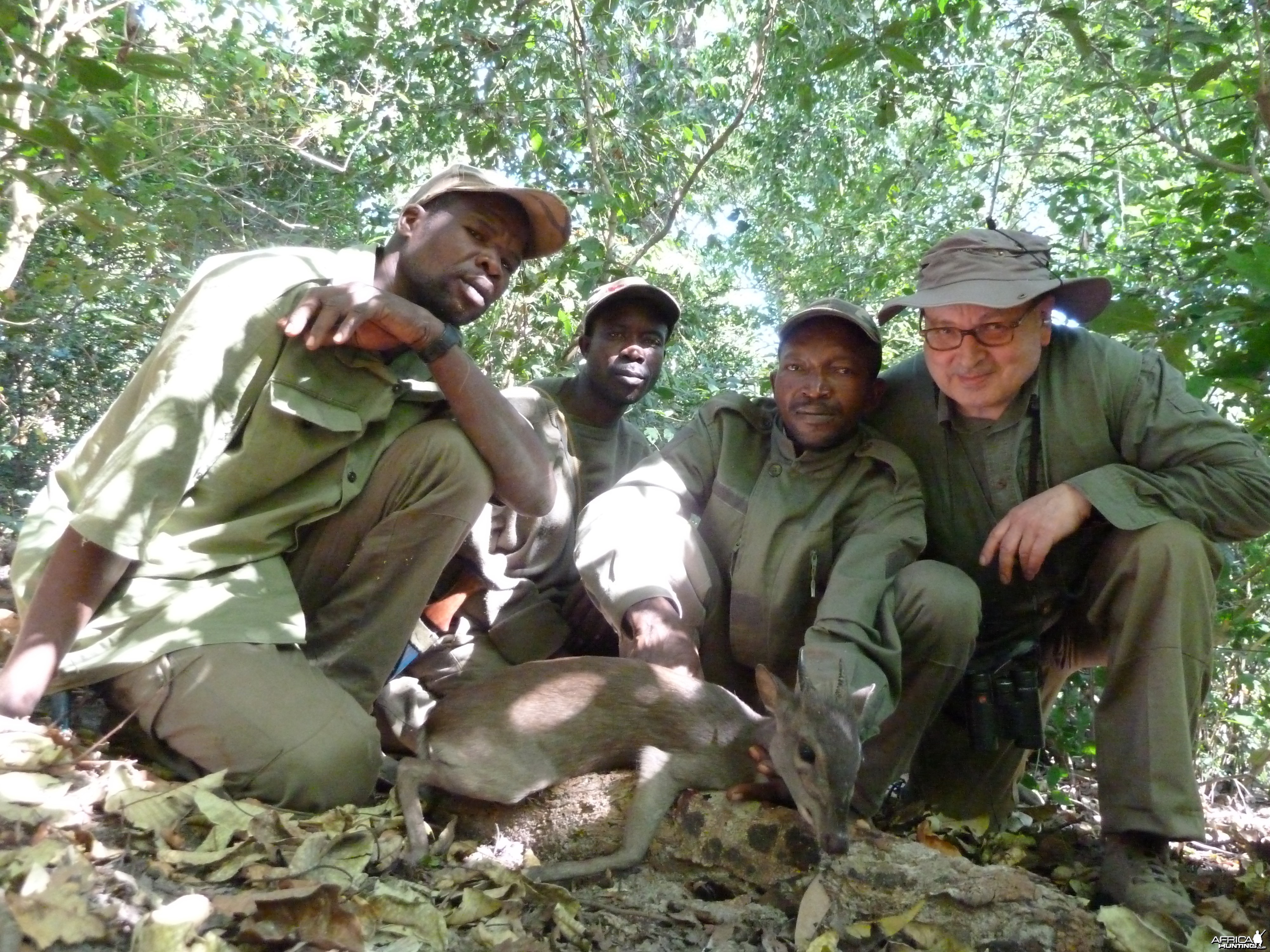 Blue Duiker hunted in Central Africa with Club Faune