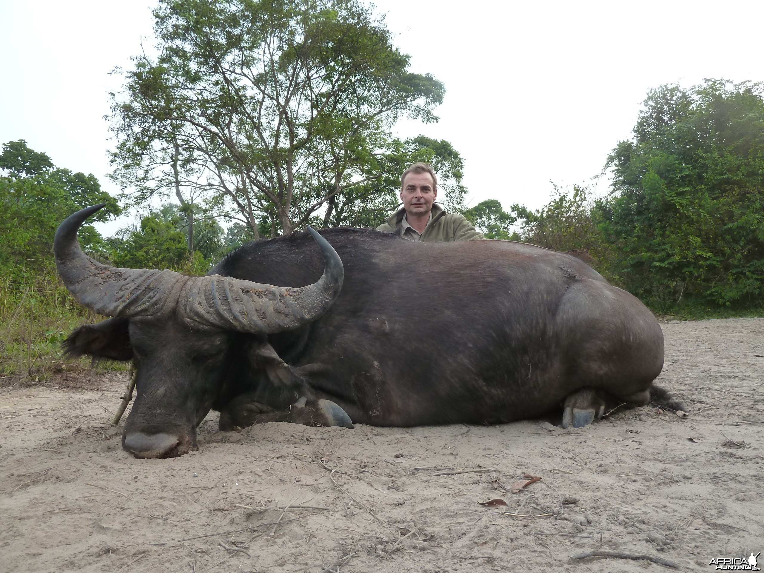 Central African Savannah Buffalo hunted in Central Africa with Club Faune