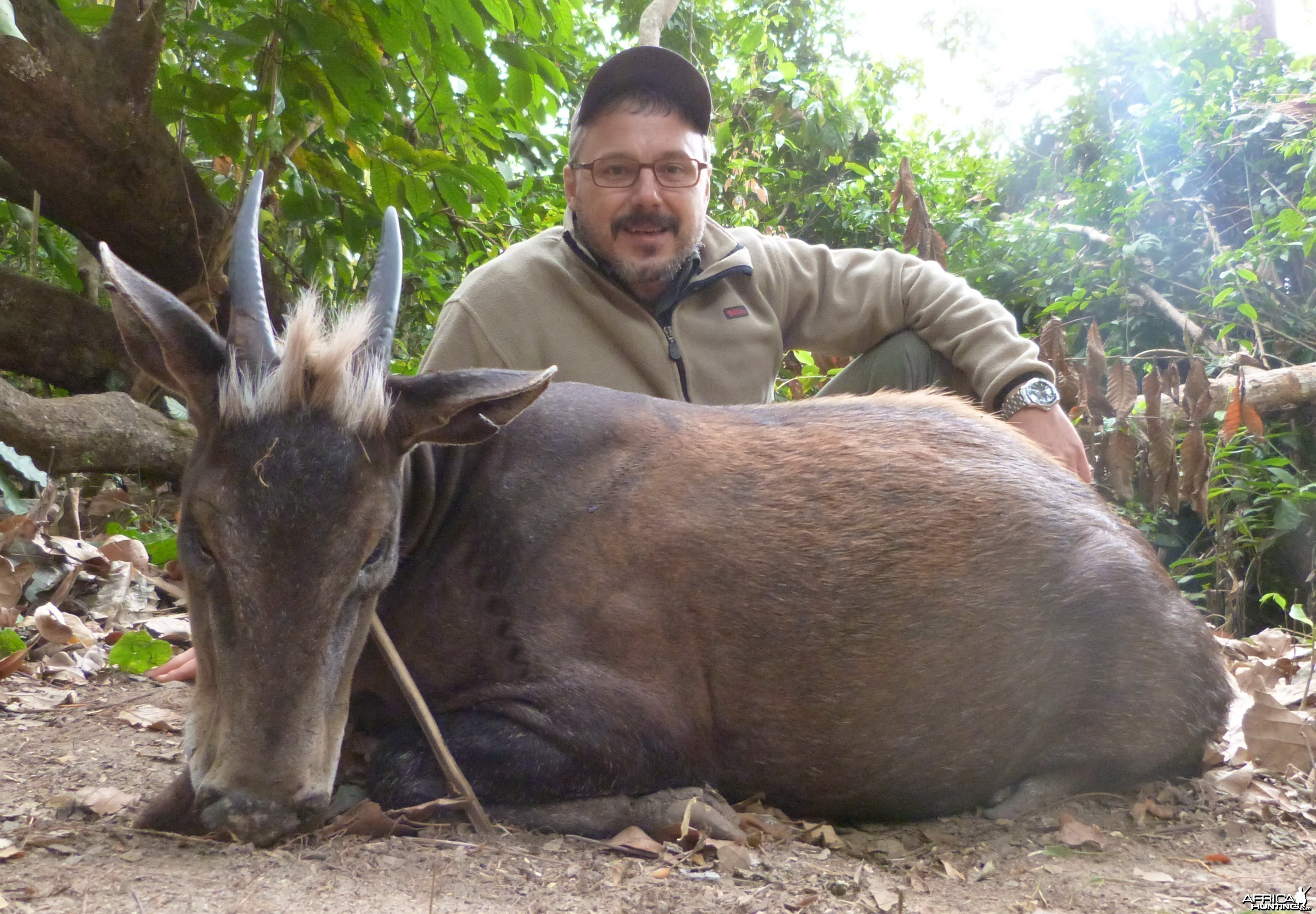 Yellow-Backed Duiker hunted in Central Africa with Club Faune
