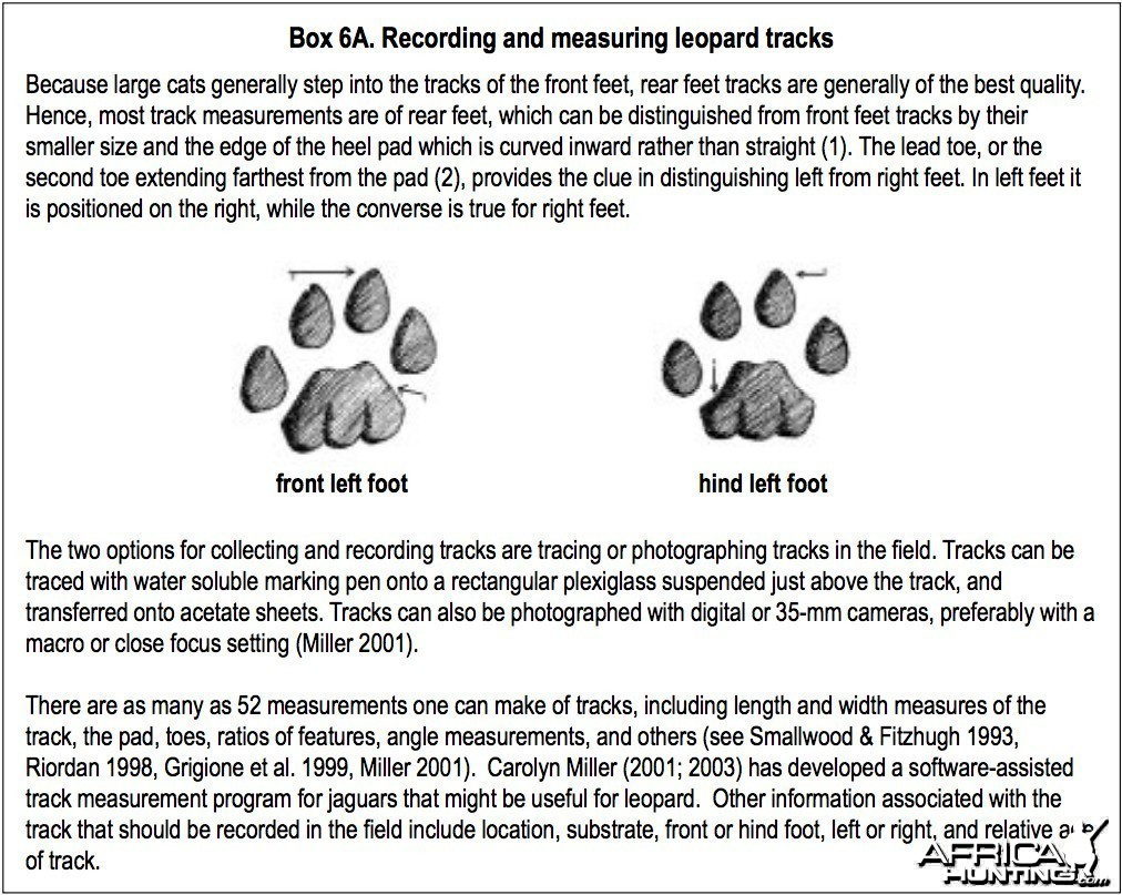 Recording and measuring leopard track