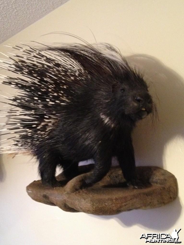 African Porcupine Mount