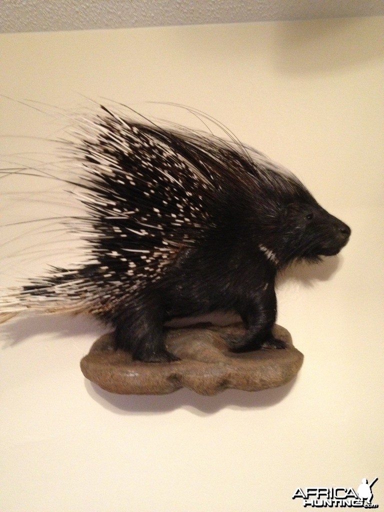 African Porcupine Mount