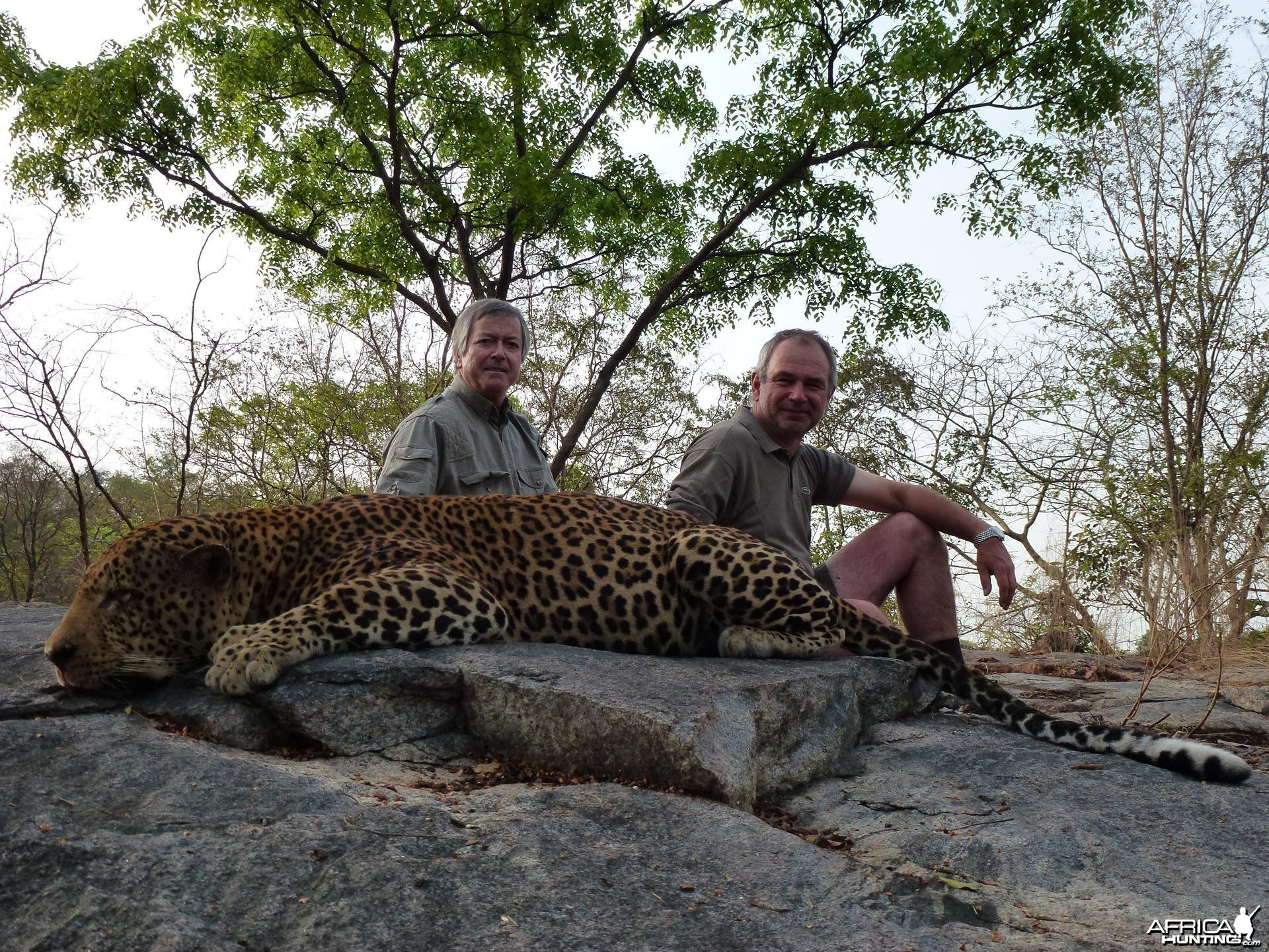 Leopard hunted in Central African Republic with Rudy Lubin Safaris