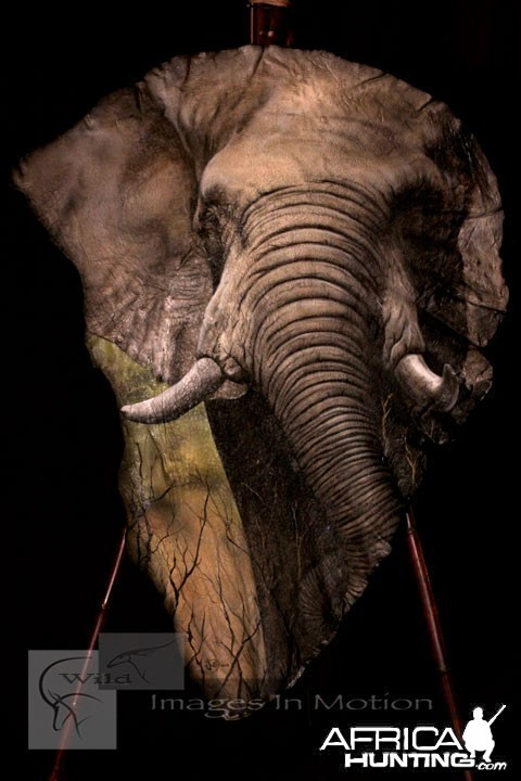 Elephant Ear Painting by Robert Utne