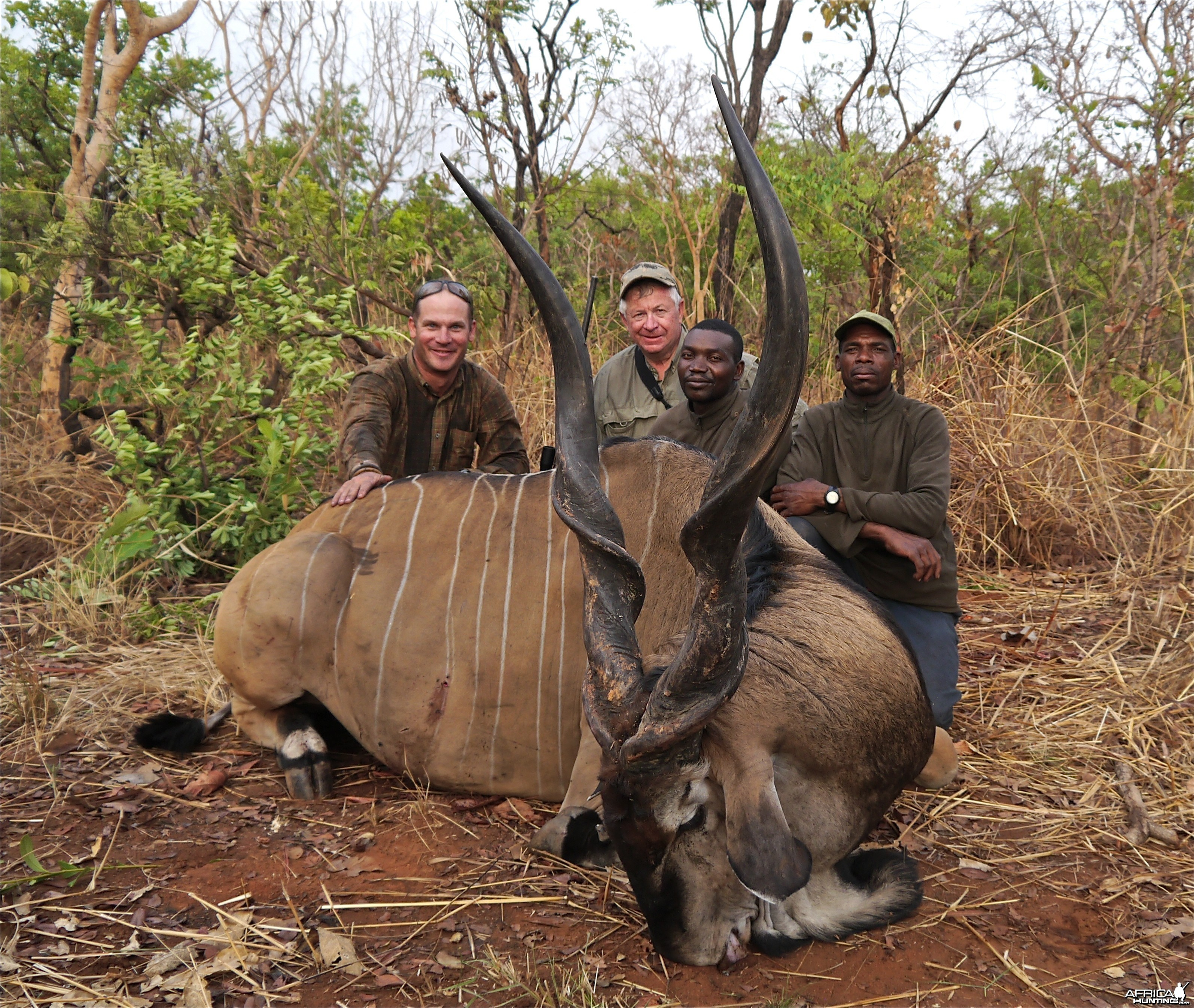 Huge Lord Derby Eland hunted in CAR with PH Francois Guillet