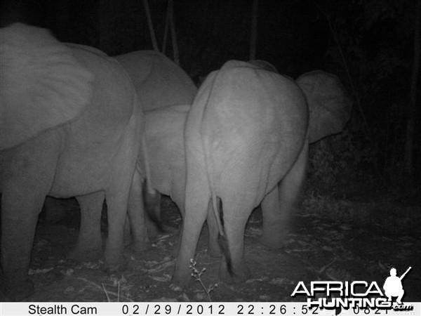 Elephant in Congo