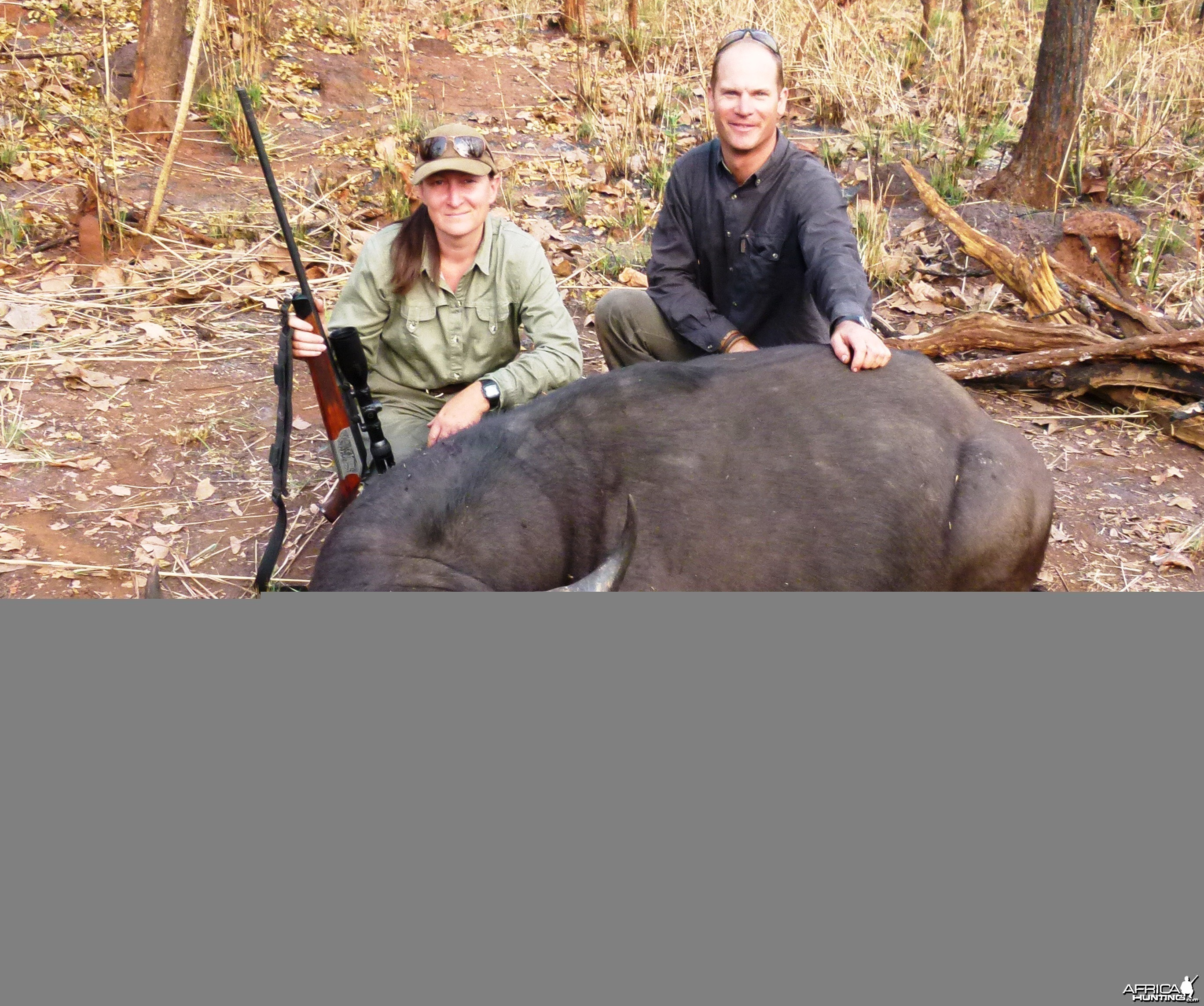 Central African Savanna Buffalo hunted in CAR