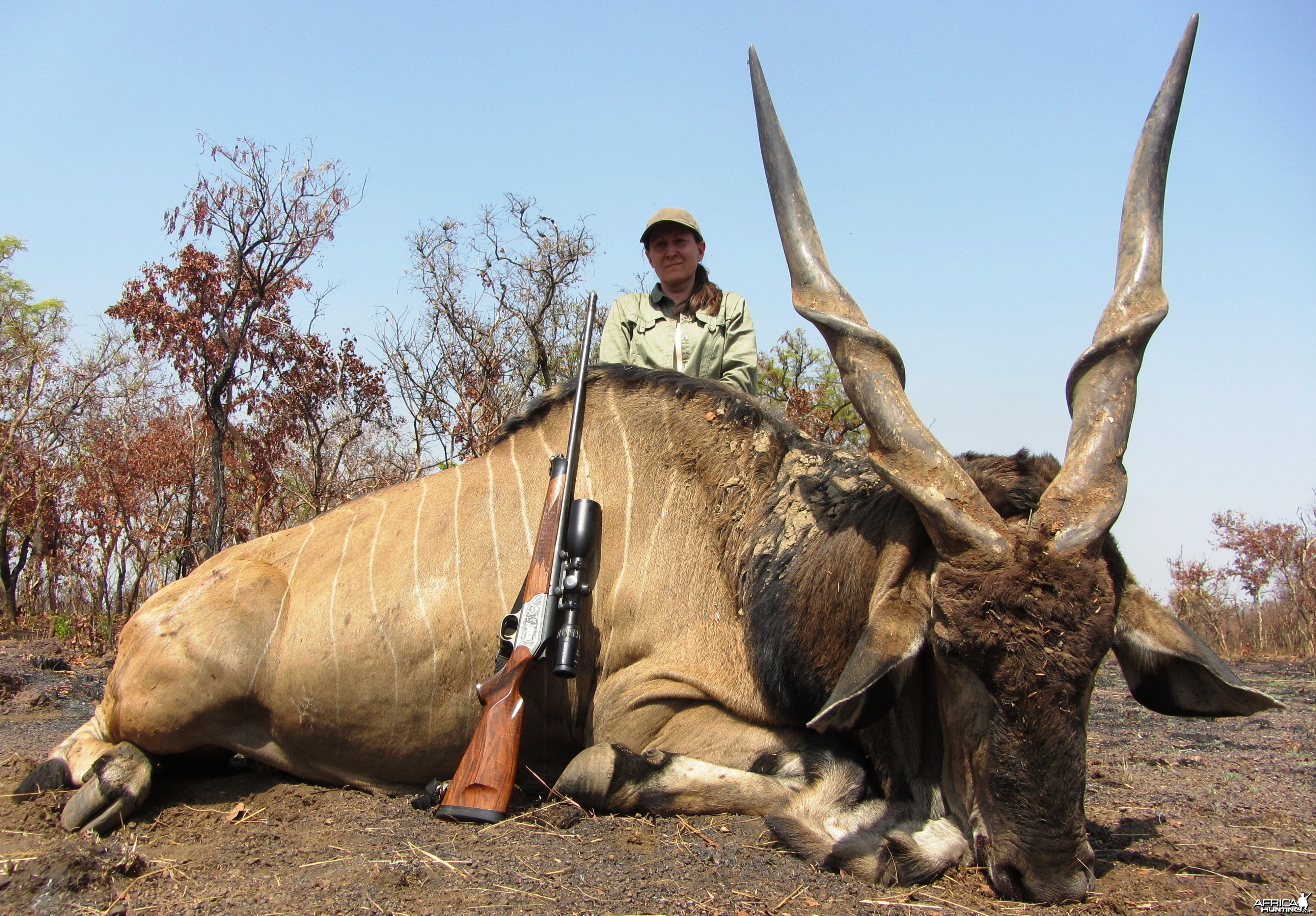 Giant Derby Eland hunted in CAR