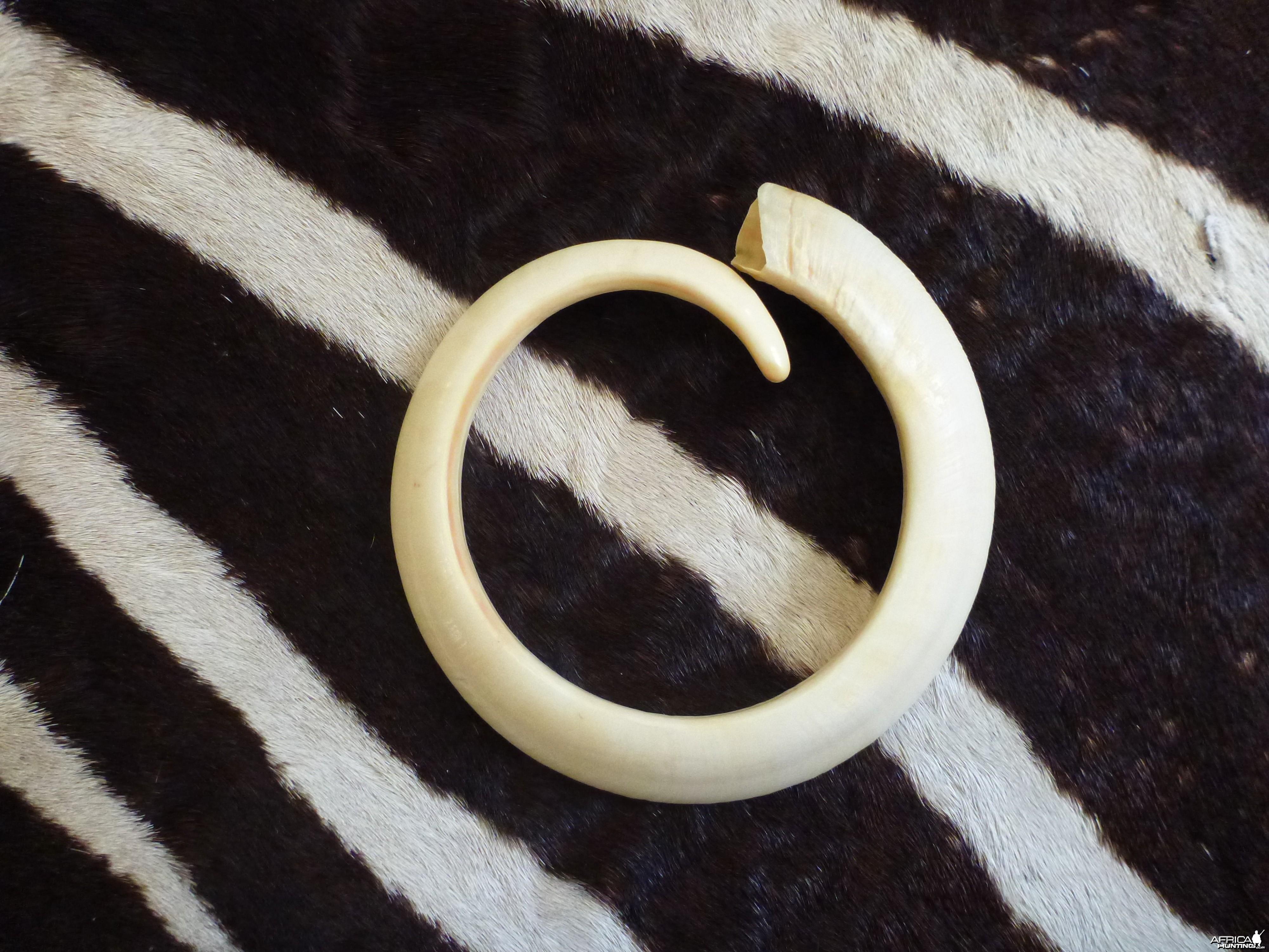 Vanuatu Pig Tusk