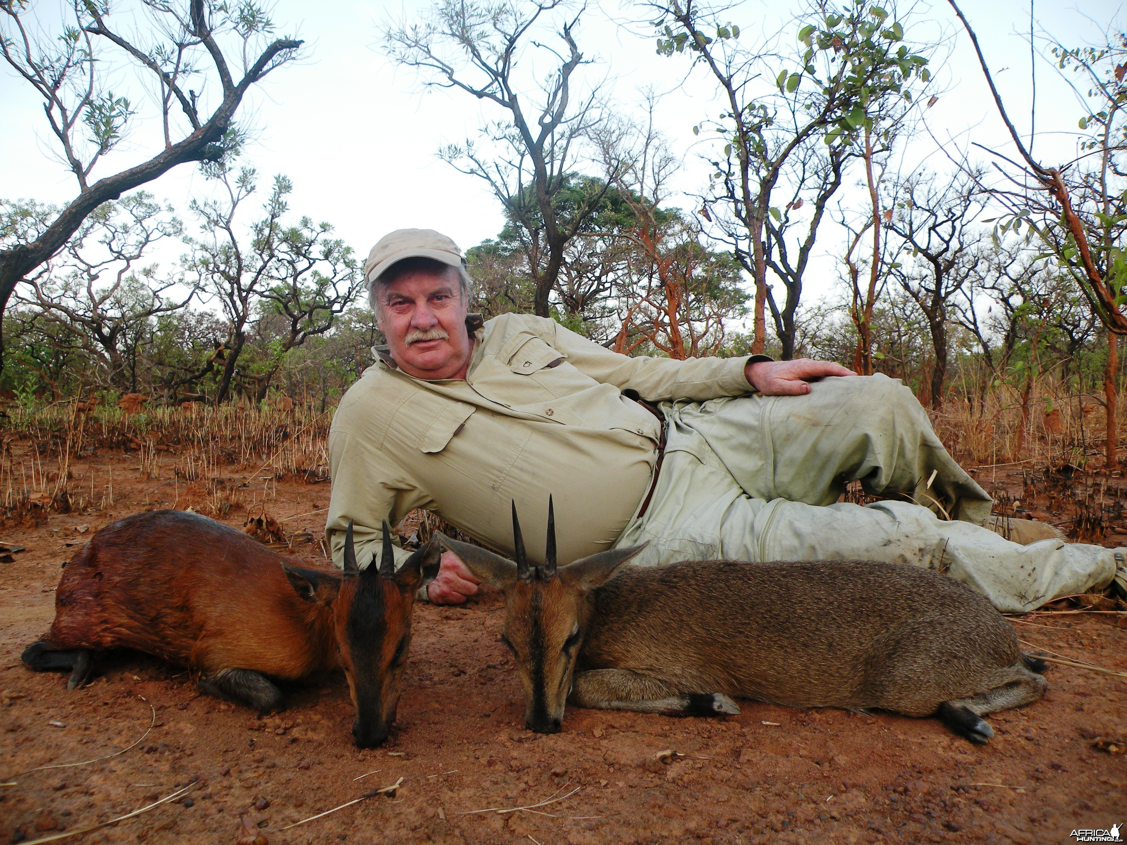 Red flanked and western bush duiker