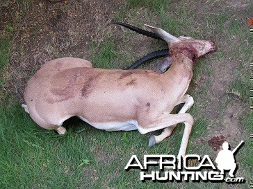 My Gazelle Hunt