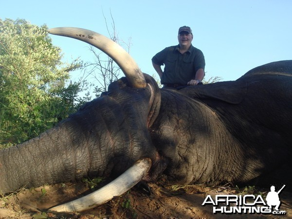 Trophy Elephant 2012