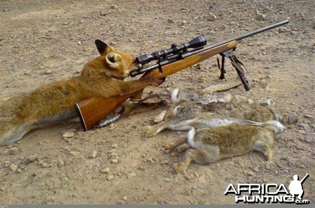 Fox Hunting in Europe - how it's actually done