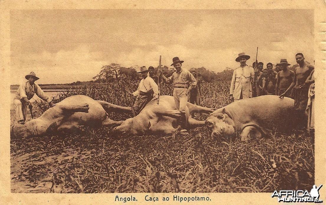 Hunting Hippo Angola