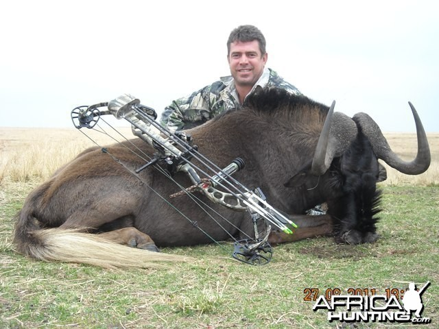 Bow Hunting Black Wildebeest