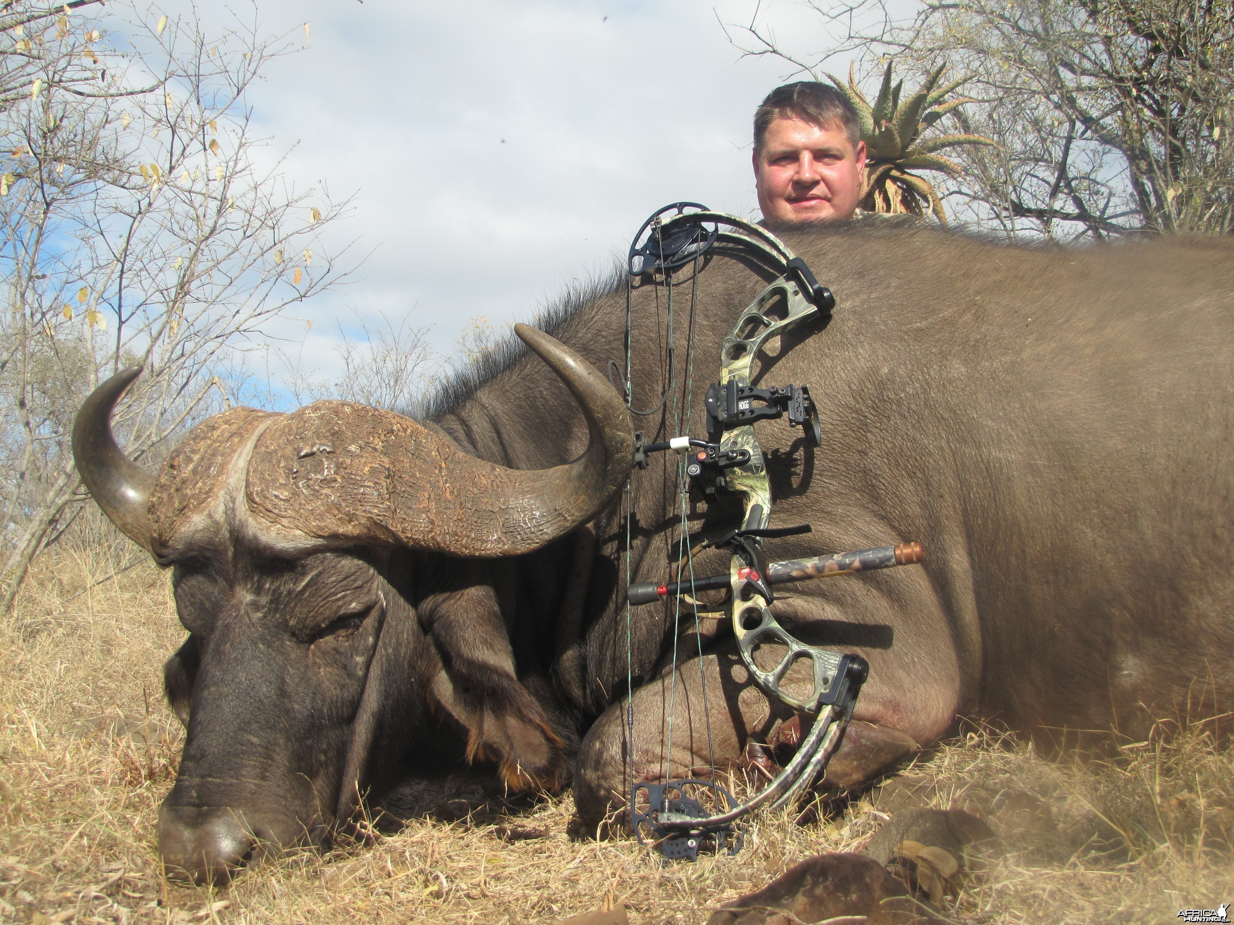 Bow Hunting Cape Buffalo