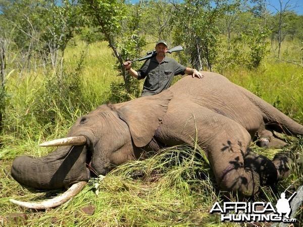 Elephant, Omay North Concession, Zimbabwe
