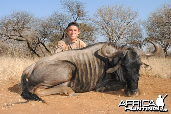 Blue Wildebeest - Spiral Horn Safaris