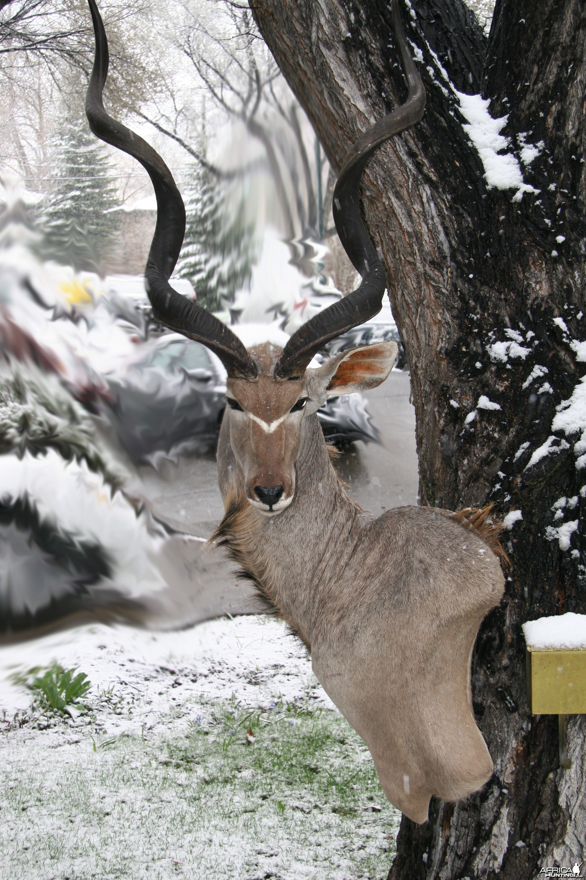 Kudu Snow