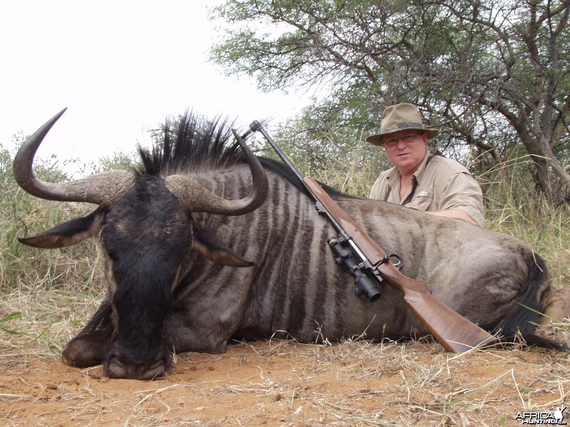 Blue Wildebeest South Africa