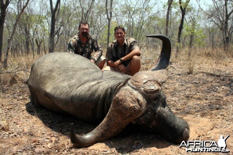 44 inch Buffalo