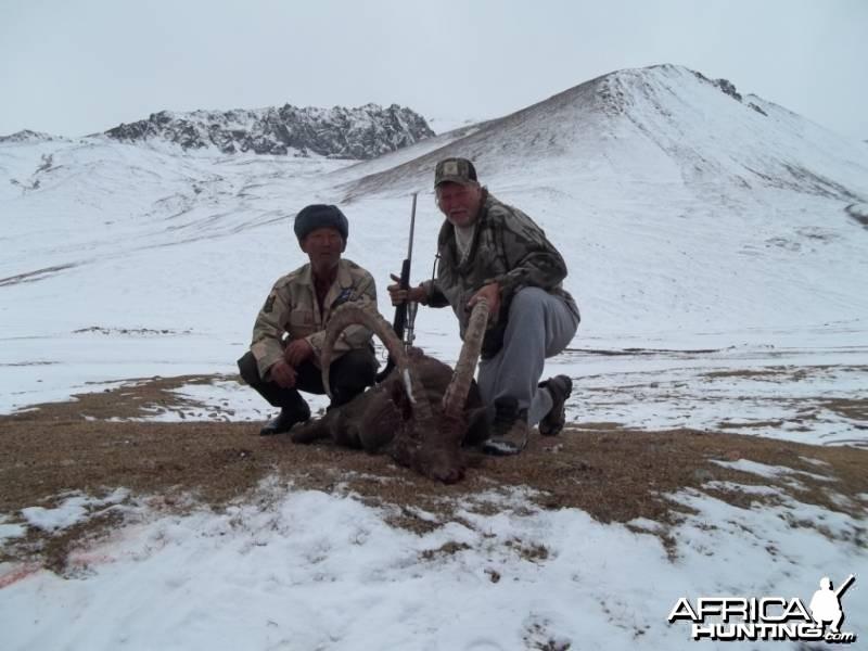 50 inch Ibex