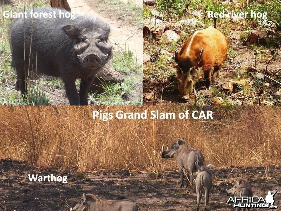 Pig Grand Slam