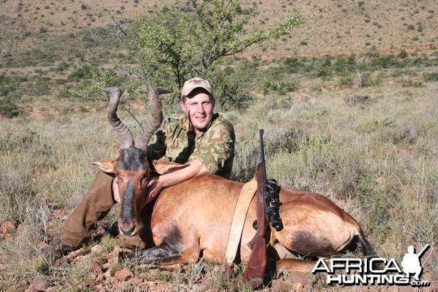 Red Hartebeest - South Africa