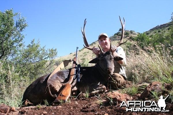 Fallow Deer - South Africa