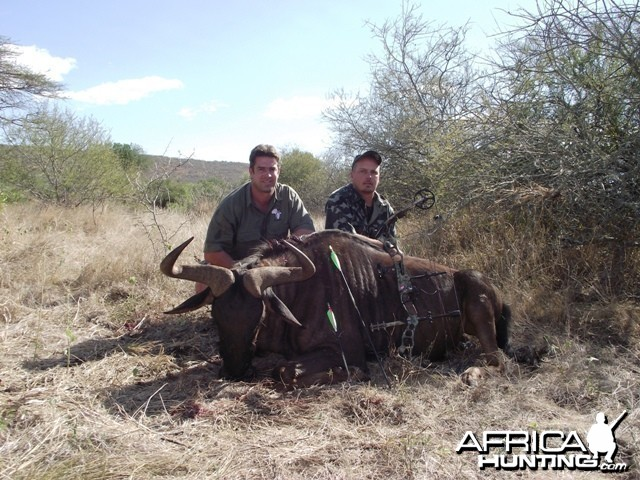 Blue Wildebeest with NUHS