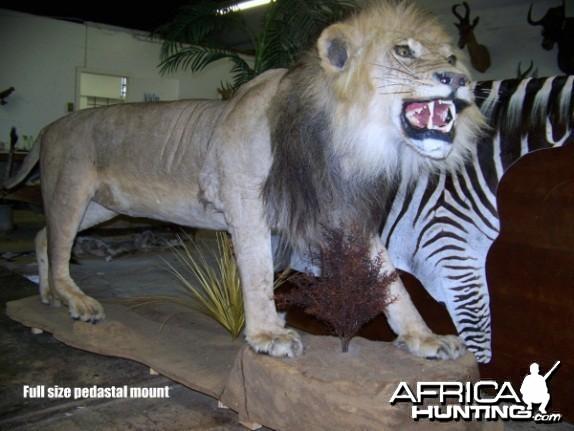 Lion full mount
