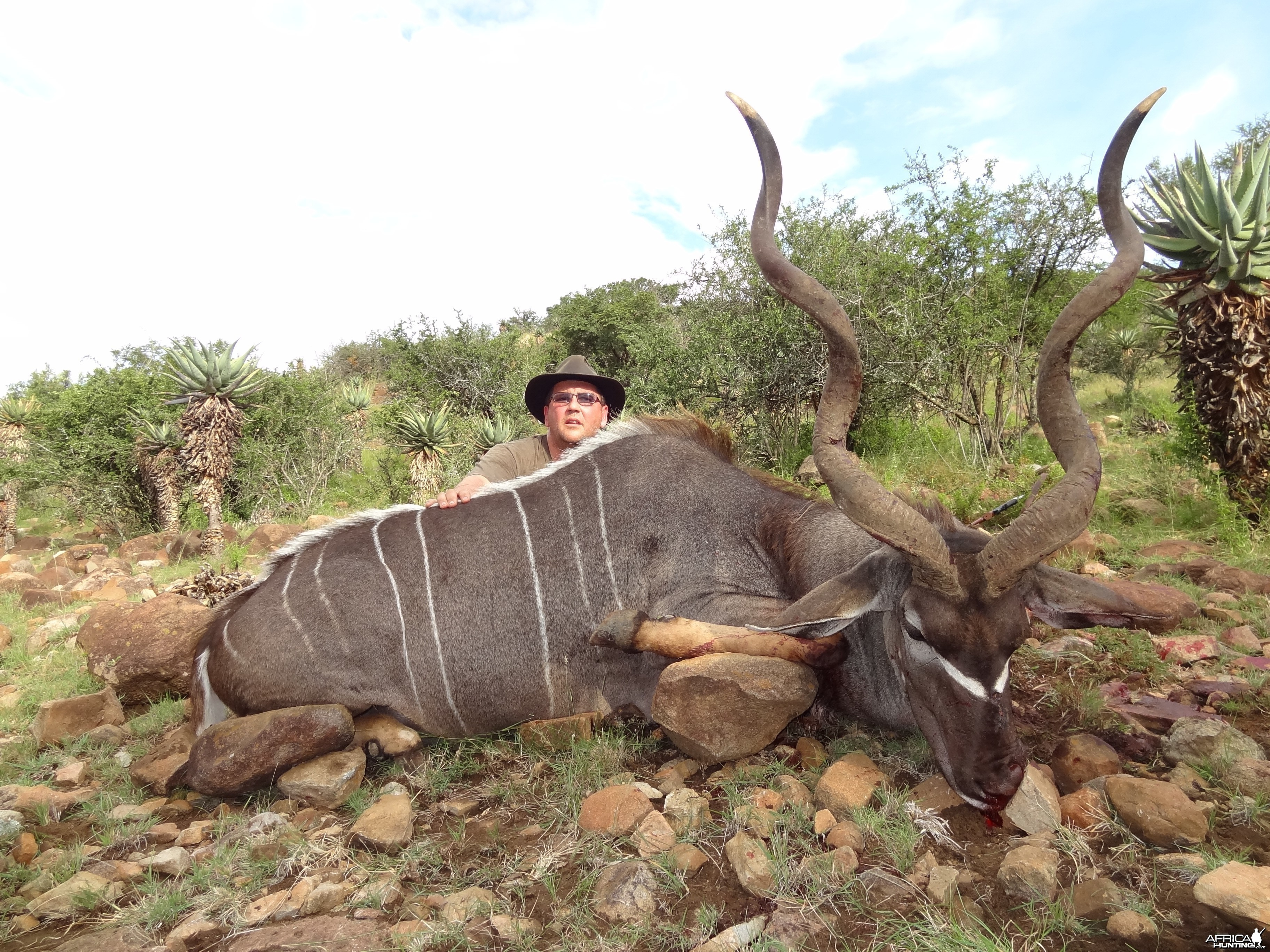 East Cape Kudu