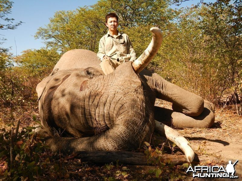 Botswana Elephant - 2