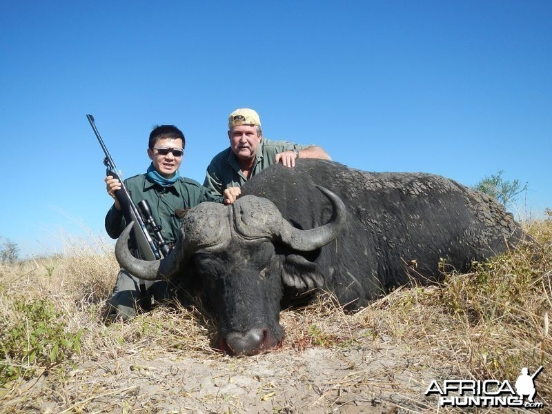 Botswana Buffalo