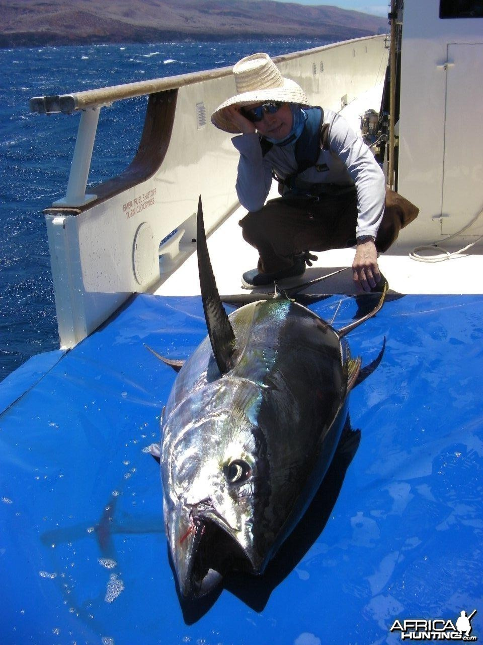 Clipperton (French) Yellowfin Tuna