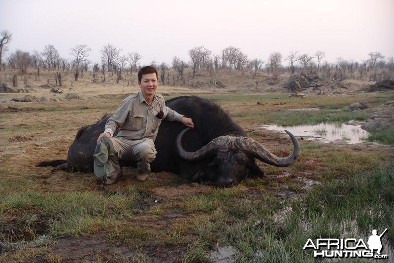 Zimbabwe Buffalo - 2
