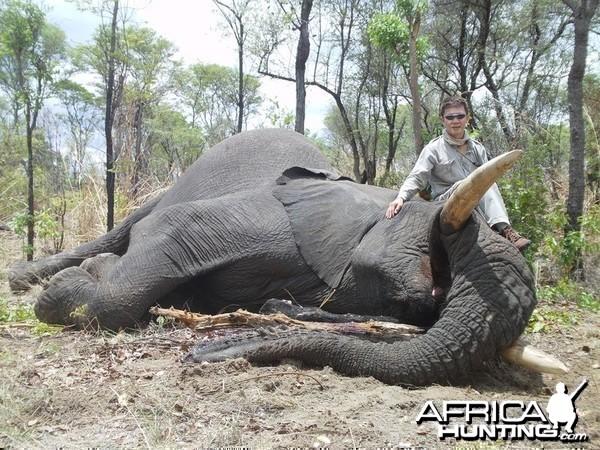 Zimbabwe Elephant - 2