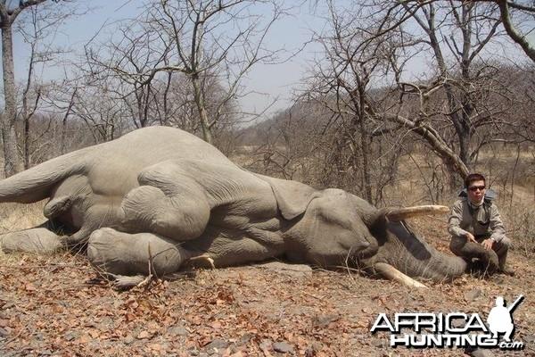 Zimbabwe Elephant - 3