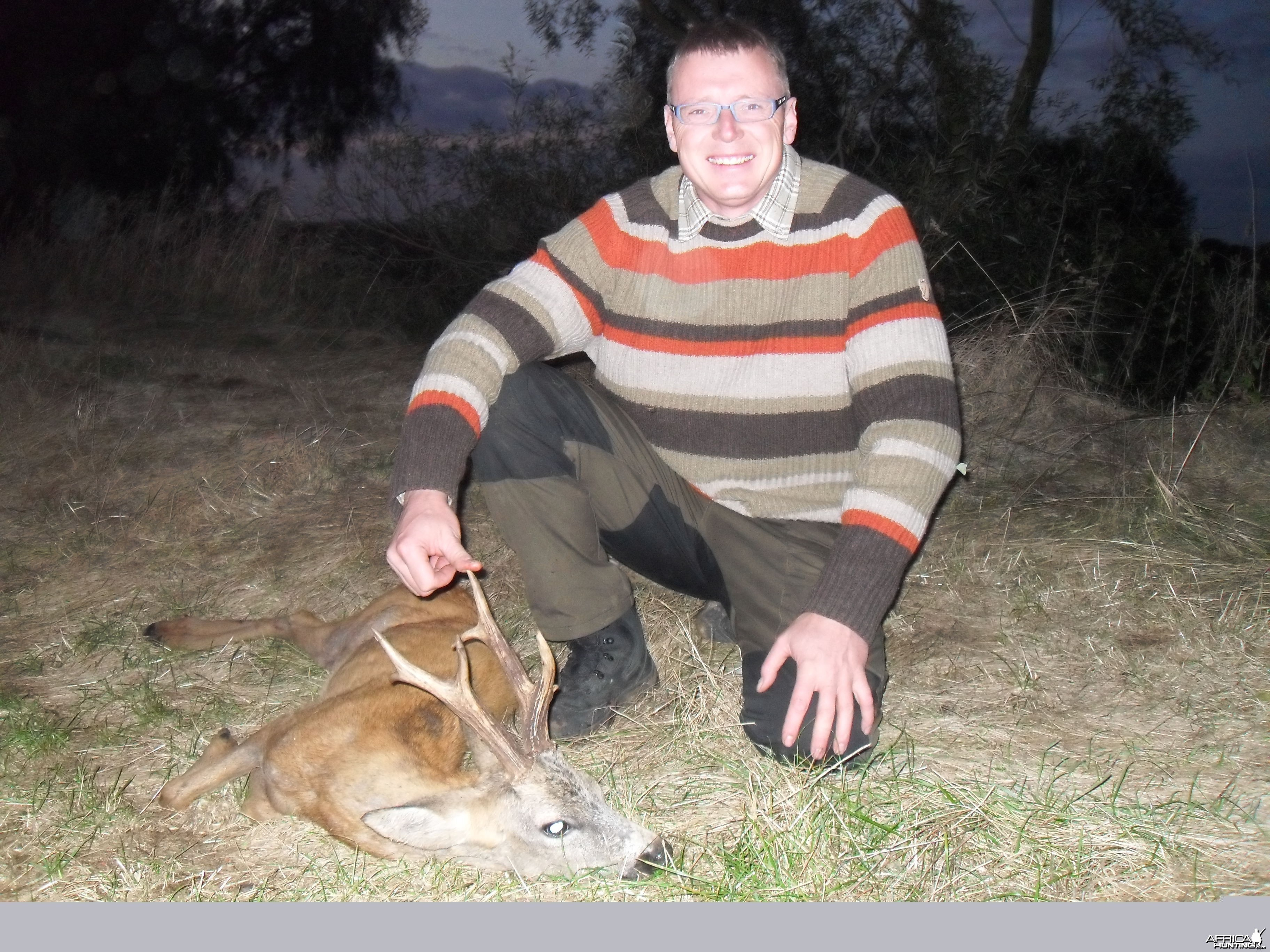 Gold medal roe buck