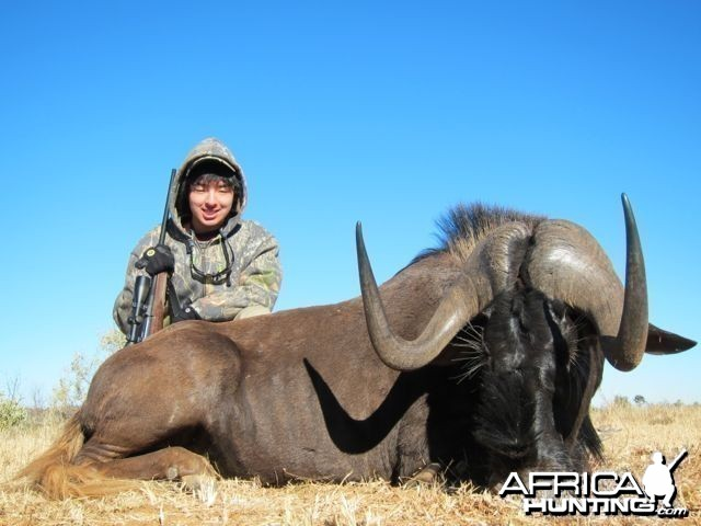 Black Wildebeest Hartview 2012