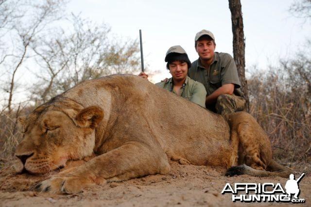 Lioness Hartzview 2012